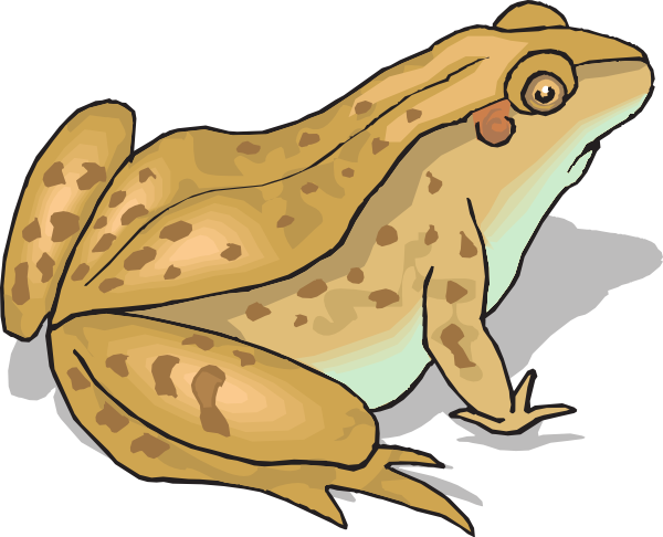 Brown Spotted Frog Clip Art A - Toad Clipart