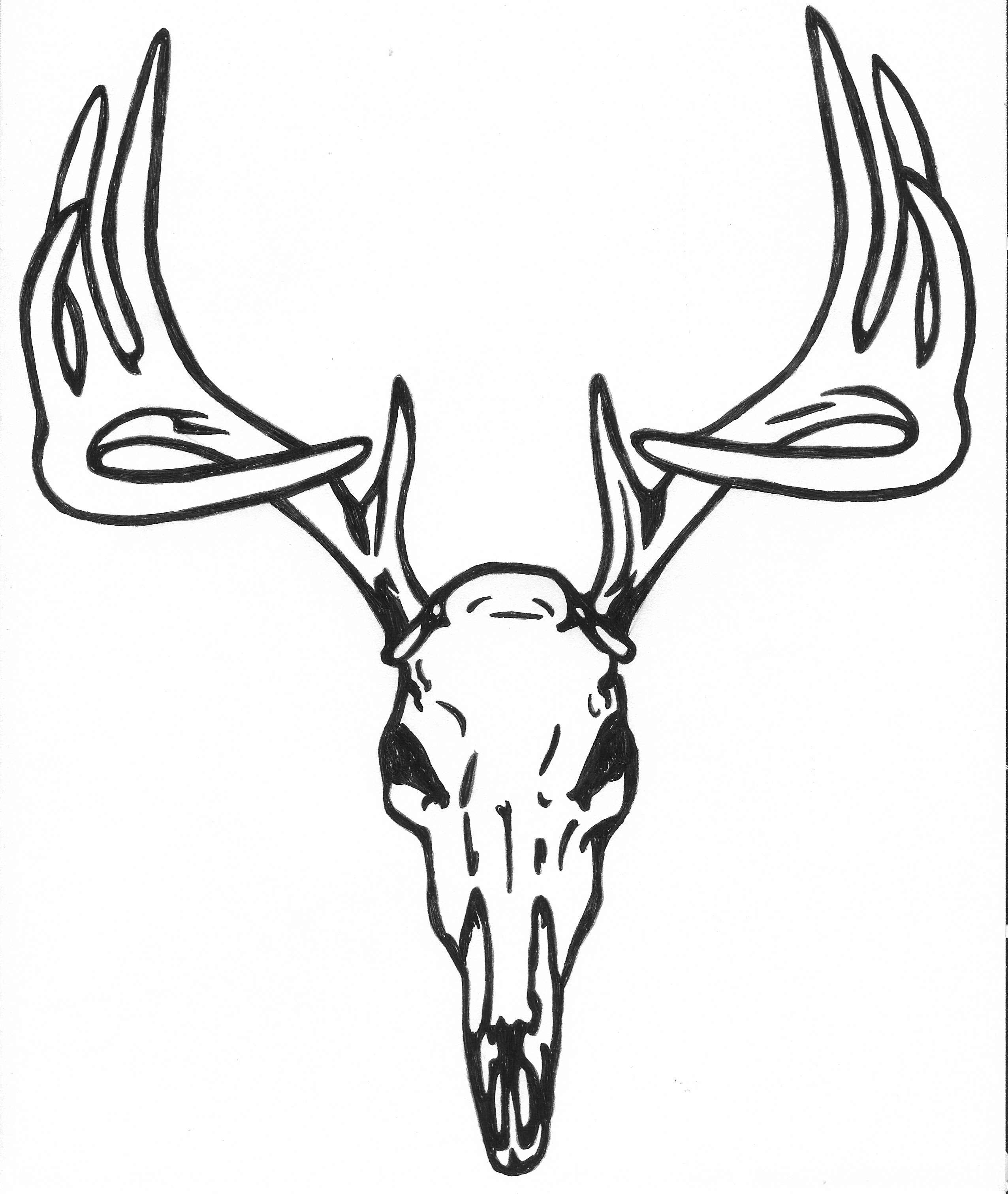 White Tail Deer Sckull Drawn: 56+ Deer Skull Clipart
