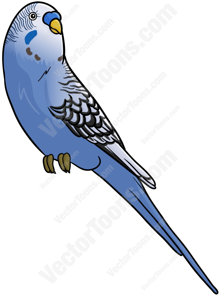 Budgie Clipart-Budgie Clipart-1