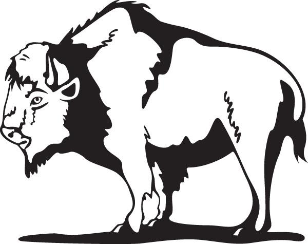 Buffalo. Buffalo5