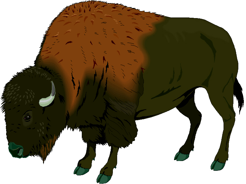 Buffalo chip clipart kid