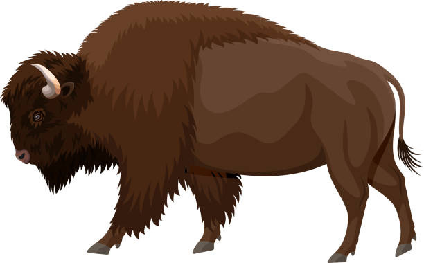 vector brown zubr buffalo bison vector art illustration