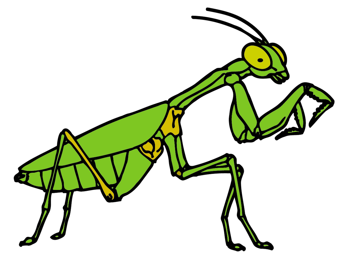 Bug Cartoon Clip Art