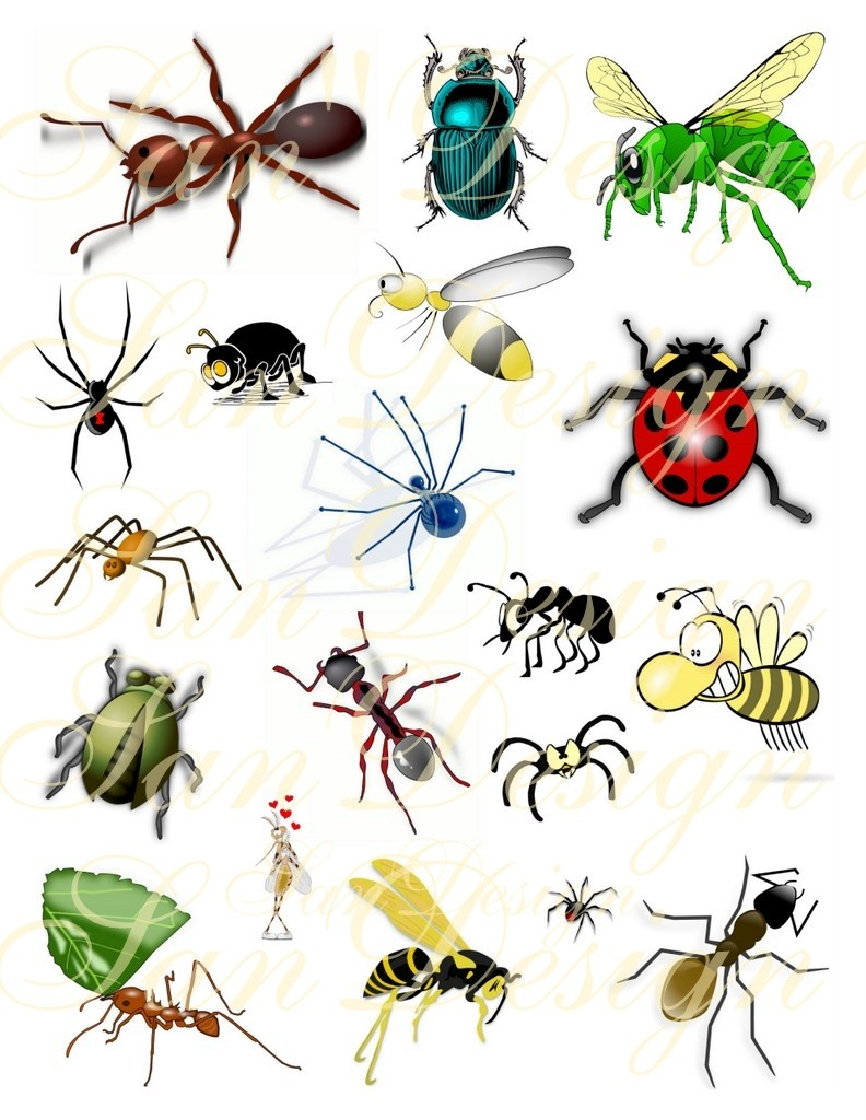 Bugs Clipart-Bugs Clipart-4
