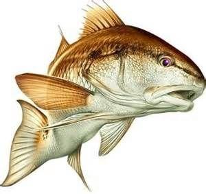Redfish Clipart