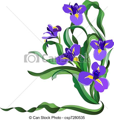 Bunch of blue irises isolated on white b-Bunch of blue irises isolated on white background-12
