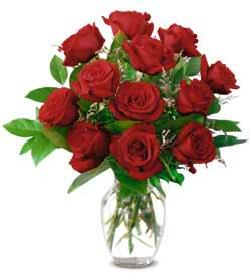 ... bunch of red roses ...