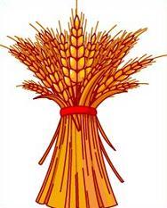 Bundled Wheat
