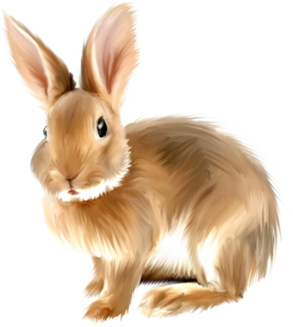 Bunny Clipart to Download .-Bunny Clipart to Download .-5