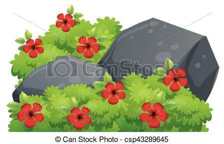 Red hibiscus flowers in the bush - csp43-Red hibiscus flowers in the bush - csp43289645-8