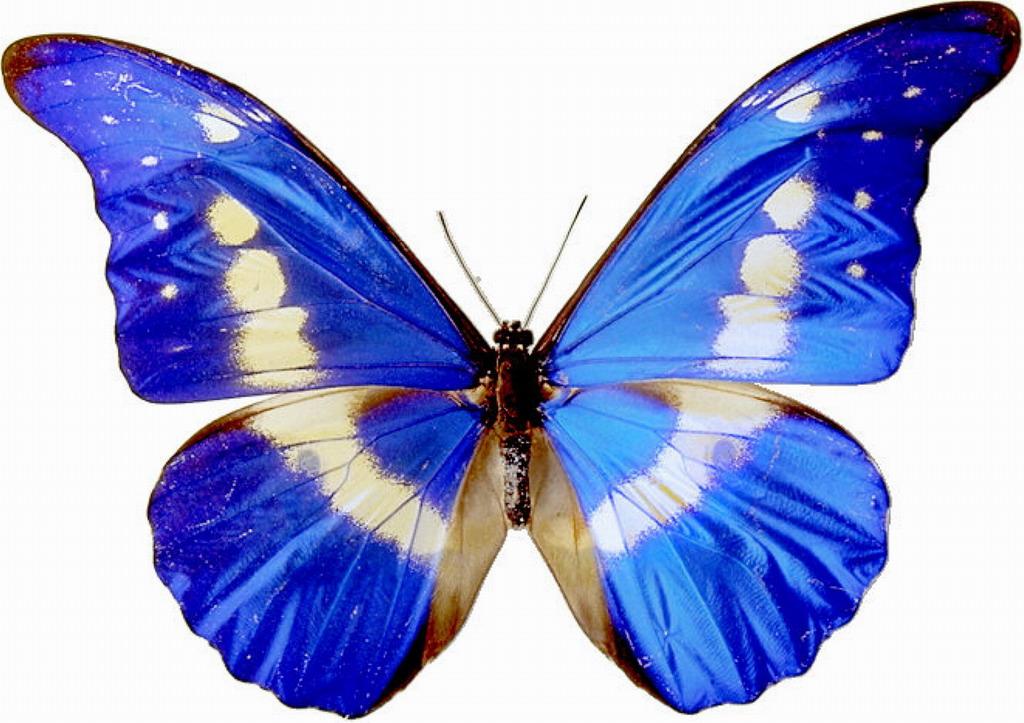 Butterflies clipart. clip .
