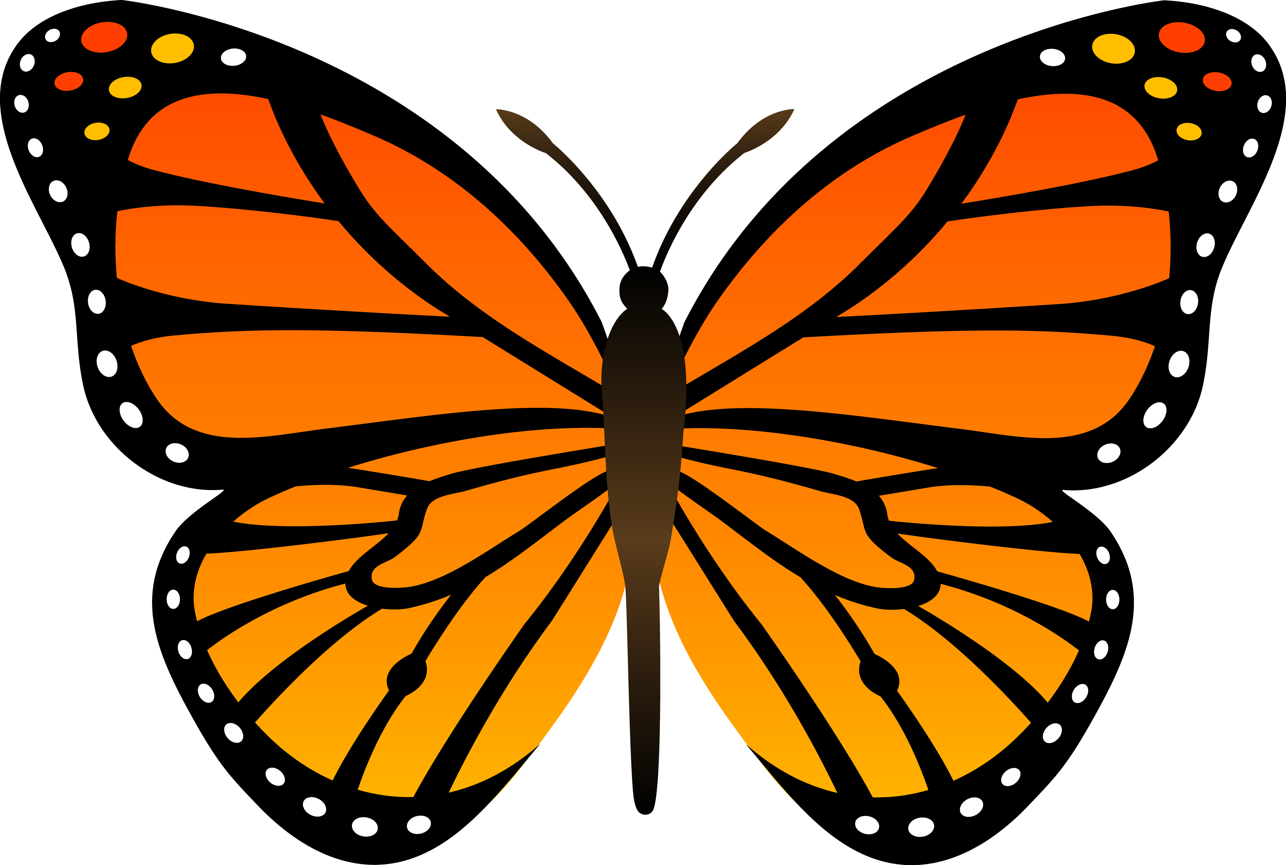 Butterflies, Orange and Google .