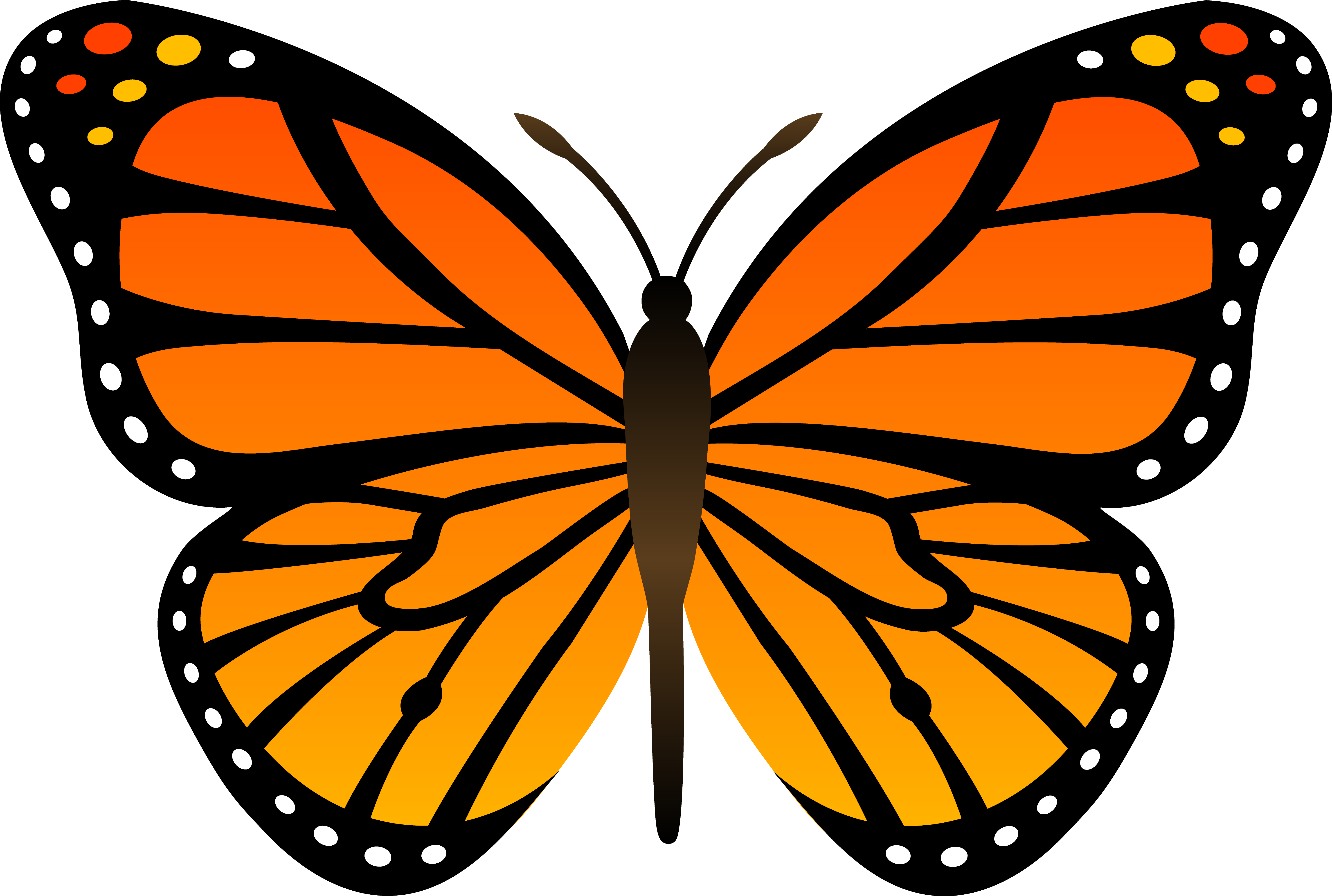 Butterfly Clip Art Animals Cleanclipart