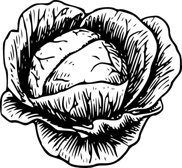 Cabbage Clip Art-Cabbage clip art-0