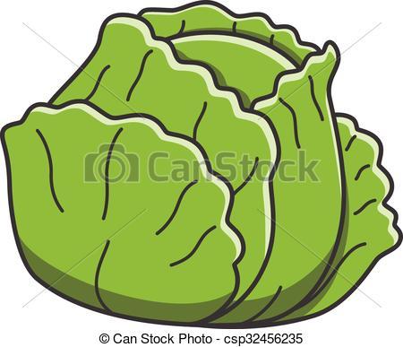Cabbage - csp32456235
