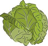 Cabbage set · Cabbage - Cabbage Clipart