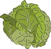 Cabbage set · Cabbage