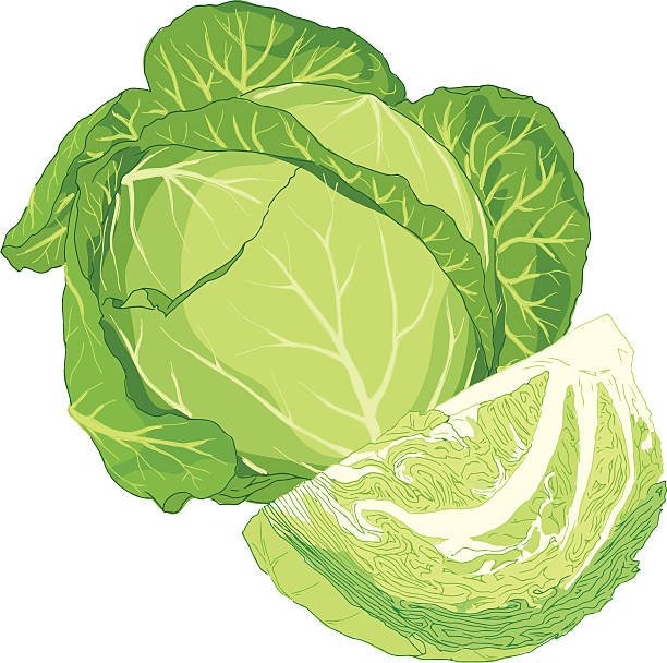 Green cabbage cabbage clipart