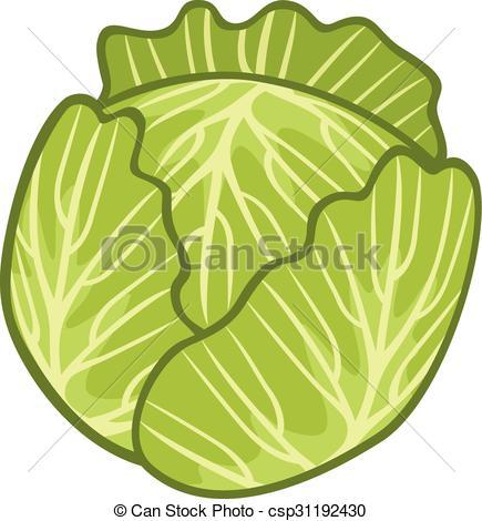 Green Cabbage Illustration