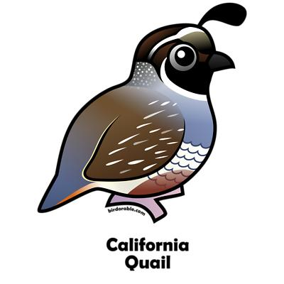 California Quail Gifts Women S V Neck Da-California Quail Gifts Women S V Neck Dark T Shirt-5