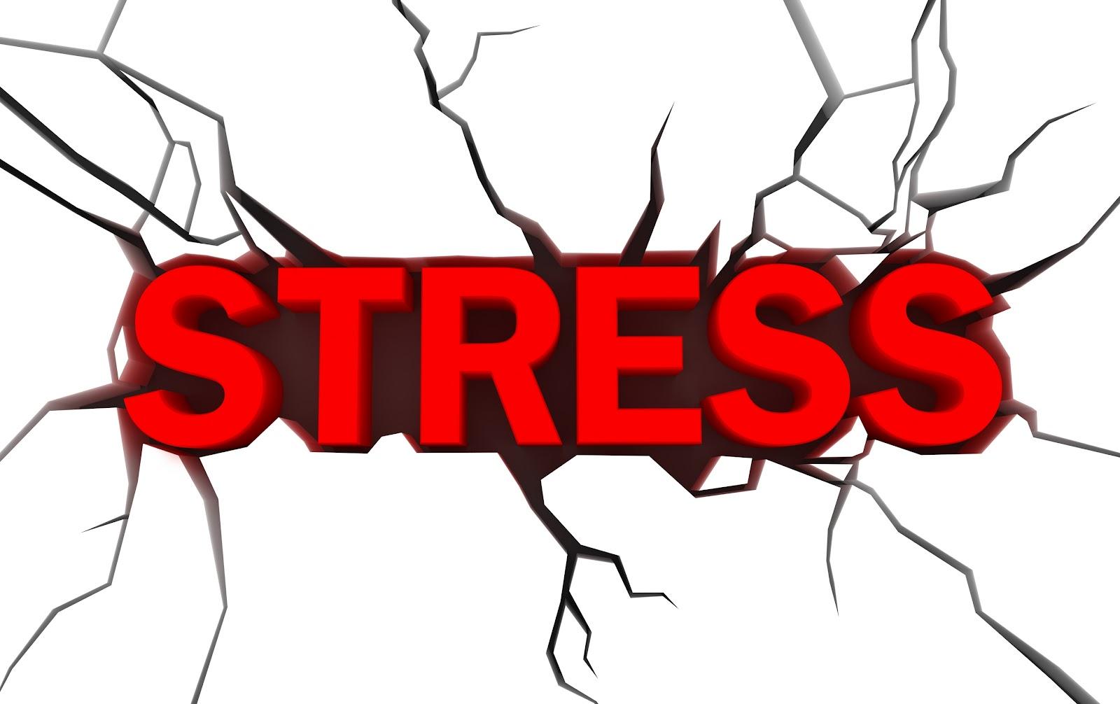 Campus Anthology Stress Free