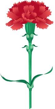Carnation Flower Gvozdika 5