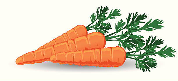 Fresh Carrots Vector Art Illustration-Fresh Carrots vector art illustration-16