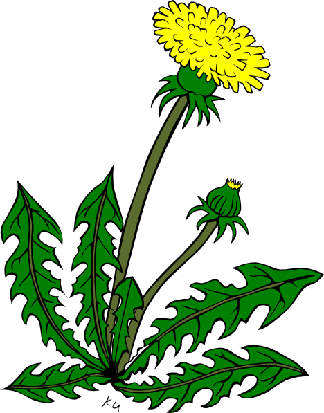 Cartoon Dandelion Flower Clip - Weed Clip Art
