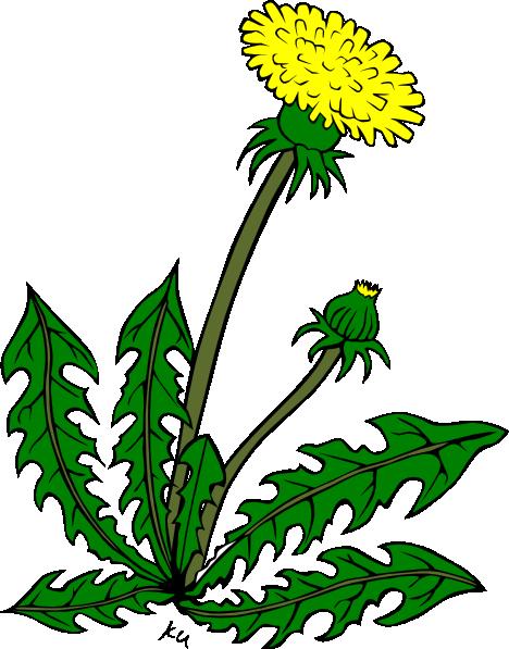 Cartoon Dandelion Flower Clipart Best-Cartoon Dandelion Flower Clipart Best-8
