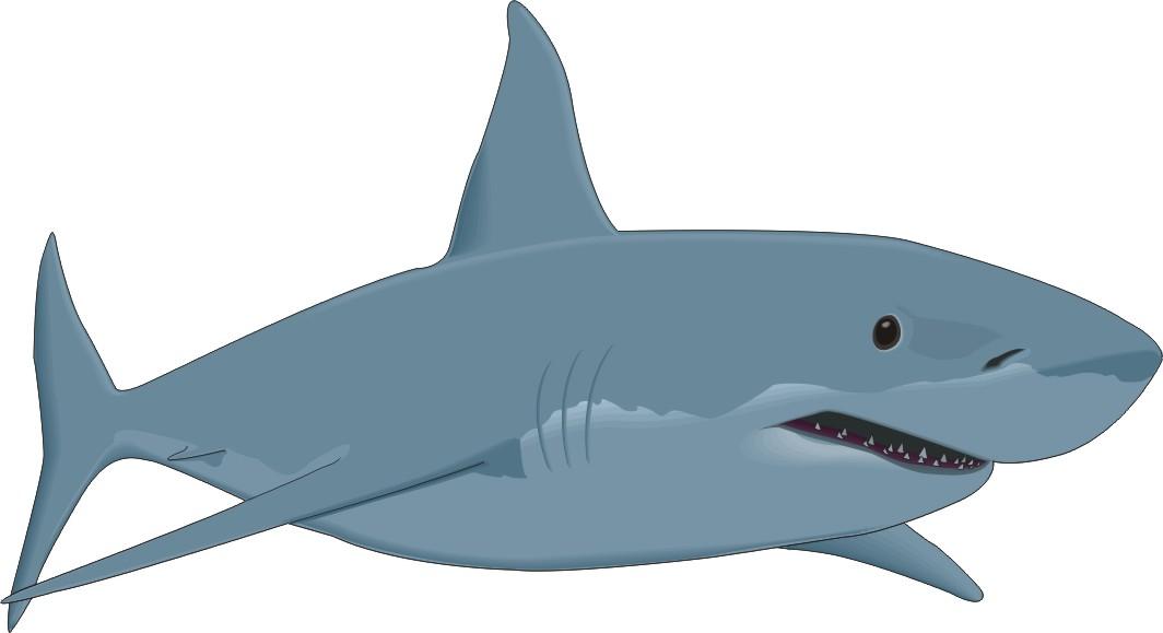 Clip Art Shark