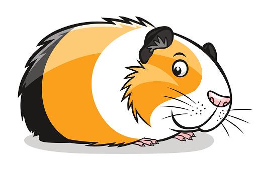 Cartoon guinea pig vector art illustration