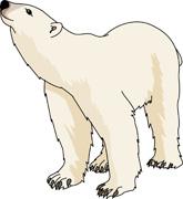 Cartoon Polar Bear Clipart