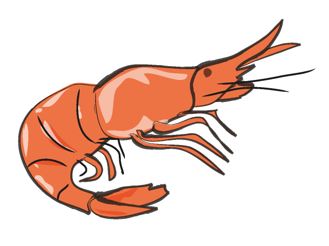 Cartoon shrimp clipart kid-Cartoon shrimp clipart kid-1