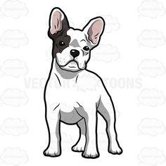 Cartoon White French Bulldog .-Cartoon White French Bulldog .-3