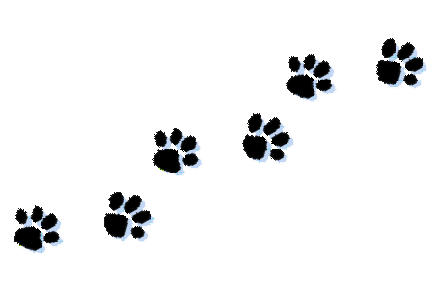 Cat paw print clipart kid