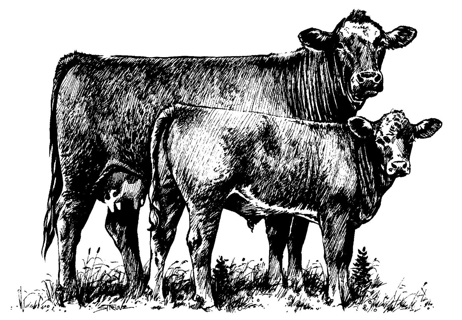 Cattle Clipart .-cattle clipart .-5