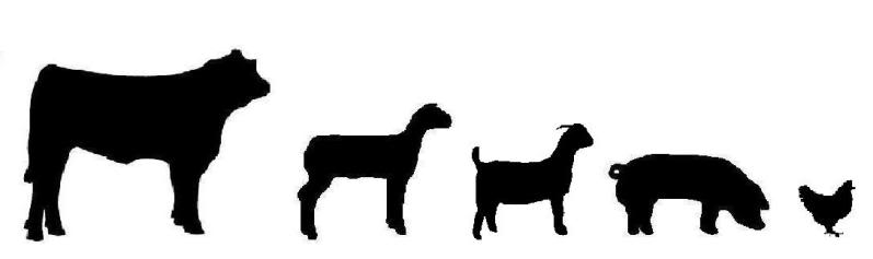 Cattle Clip Art. The Global .