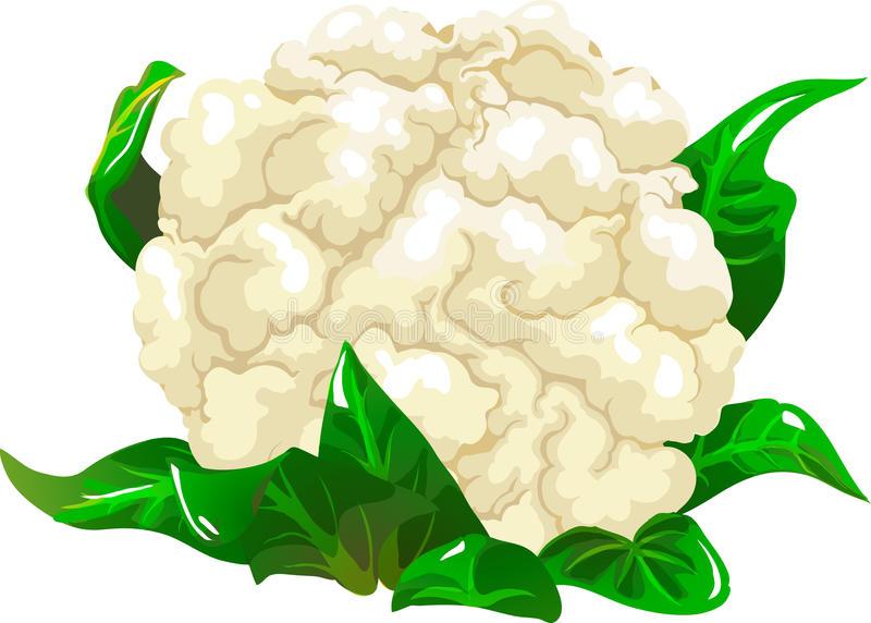 Cauliflower - Cauliflower Clipart