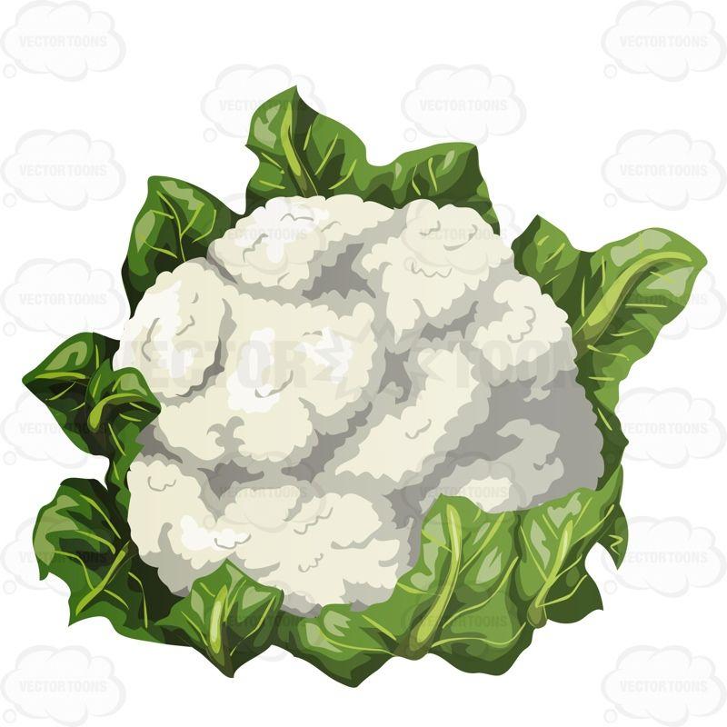 Cauliflower Clipart - Google Search-cauliflower clipart - Google Search-7