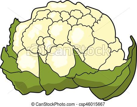 cauliflower - csp46015667 - Cauliflower Clipart