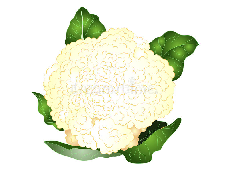 Download Cartoon Cauliflower Clipart Stock Vector - Illustration of  healthy, salad: 81480326