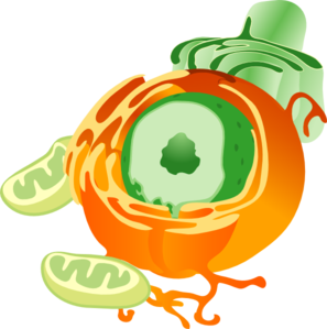 Cell Clipart-cell clipart-7