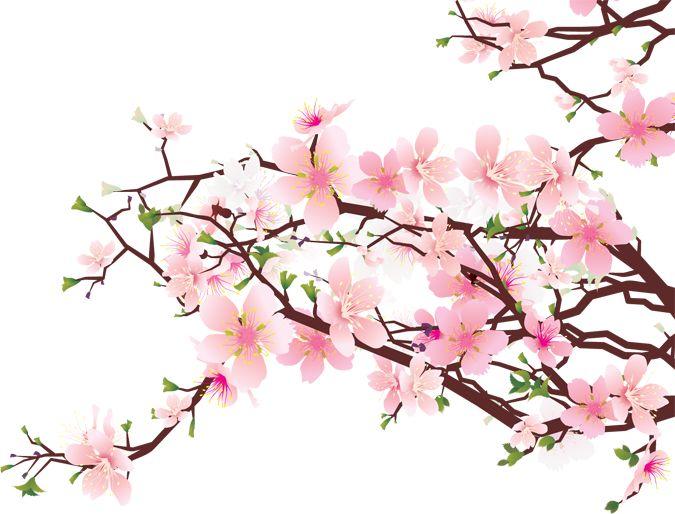 Cherry Blossom Clip Art Cherry Blossom Sakura Pinterest Cherry