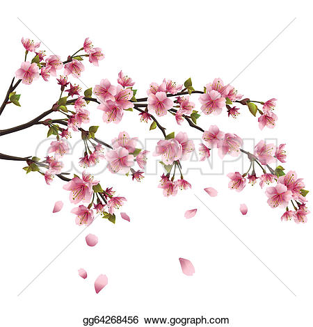 cherry blossom u0026middot; Realistic sa-cherry blossom u0026middot; Realistic sakura blossom - Japanese cherry tree with flying petals isolated on white background-14