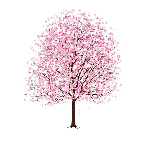 Cherry Blossom Tree Clip Art Cherry Cherries