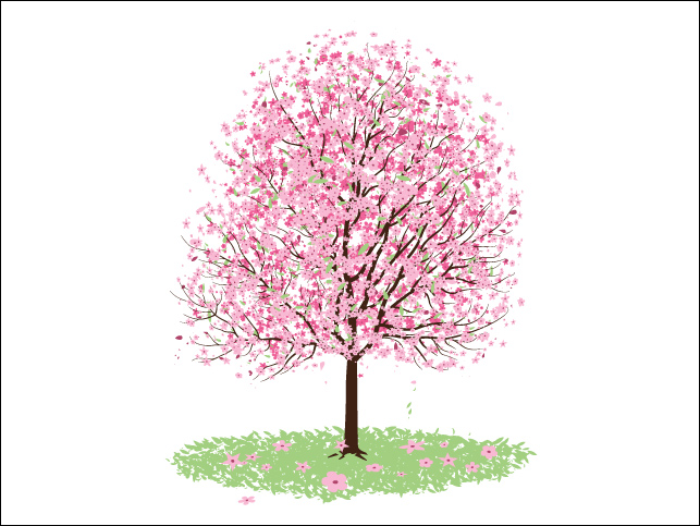 Cherry Blossom Tree Clip Art Food And Drink Pictures
