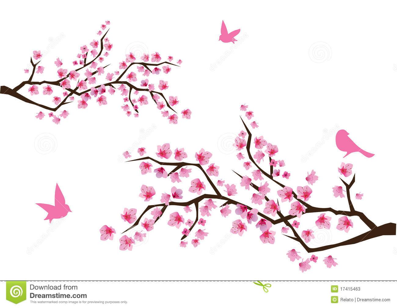 cherry blossoms | Cherry blossom
