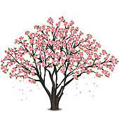 Cherry Tree Blossom U0026middot; Japanes-Cherry tree blossom u0026middot; Japanese cherry tree blossom over white-2