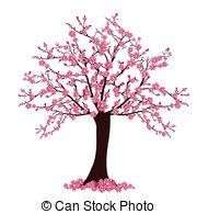 Cherry Tree. Cherry Blossoms