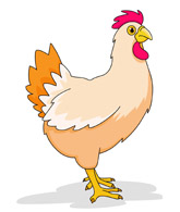 Chicken Cartoon Clipart Size: 66 Kb
